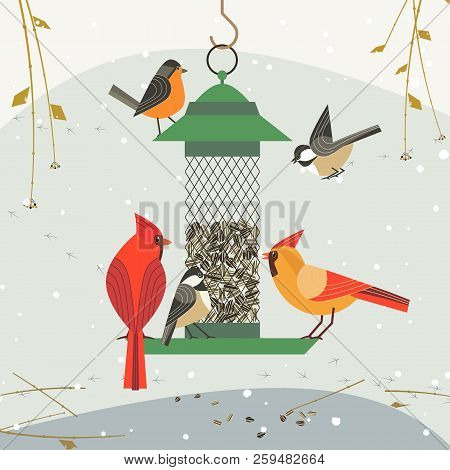 Cute birds poster. Red Northern cardinal, chickadee robin comic cartoon. Minimalism simplicity design. Winter bird feeding by sunflower seeds in feeder. Birdwatching background. Vector illustration poster