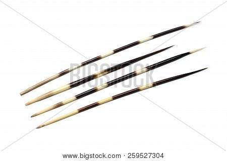 Porcupines Quills Or Spines Isolated On White Background