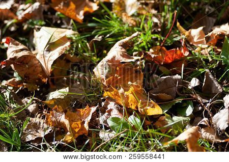 Autumn Background With Dry Orange Leaves Top View