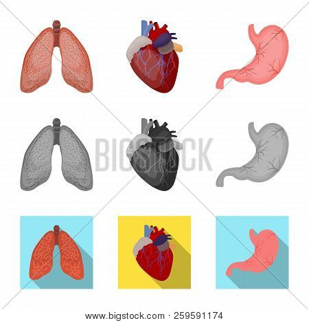 Vector Design Of Body And Human Sign. Set Of Body And Medical Stock Vector Illustration.