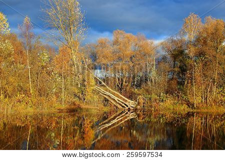 The Autumn Forest And The Lake. Yellow Autumn Trees. Autumn Nature. Russian Forest. The Northern For