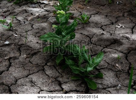 Parched Land With Green Crop Texture Background