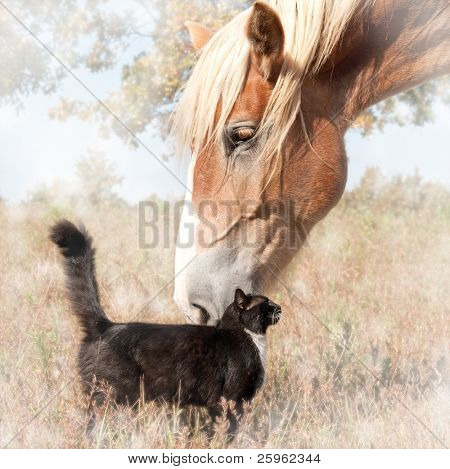 Dreamy image of a small black cat and a huge Belgian Draft horse snuggling - friendship without limits