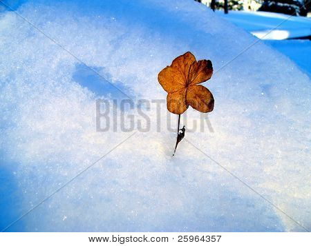Winter flower alone and frozen poster