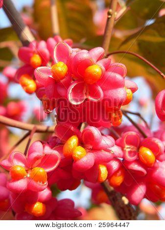 Interesting autumn flowers