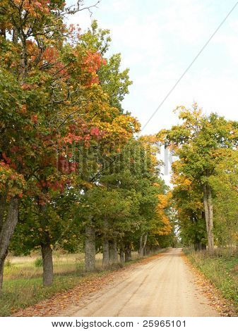 Autumn colored road