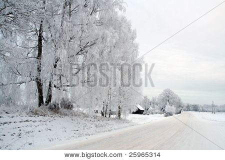 White winter scene whith road and frosty birch