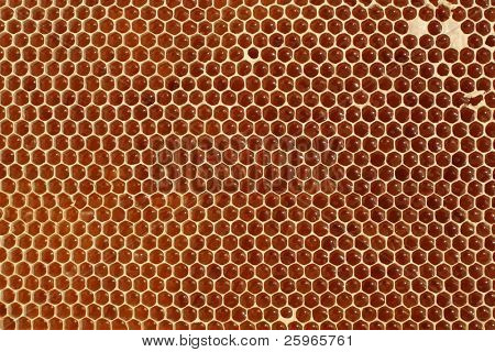 Macro of honeycell
