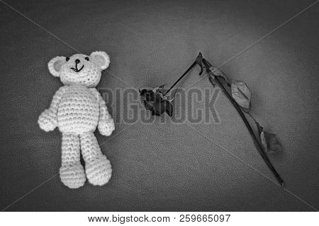 A Soft Teddy Bear, Toy For A Newborn Baby With A Dry Broken Rose, Isolated On A Gray Background. Sud