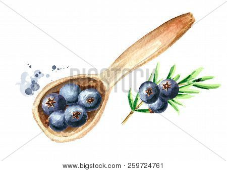 Juniper  Berries In The Wooden Spoon. Top View. Watercolor Hand Drawn Illustration  Isolated On Whit