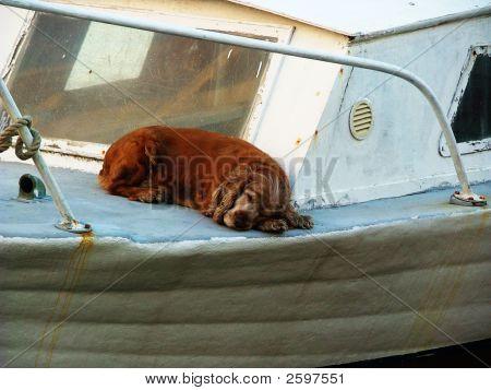 Dog Nap On A Boat