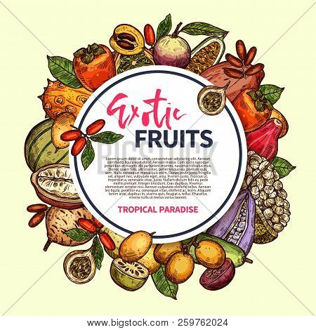 Tropical Berries And Exotic Fruits Vector Frame. Kiwano, Persimmon And Cantaloupe, Date, Star Apple