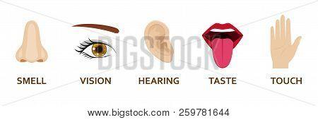 Five Human Senses Icons Set. Cartoon Design Nose, Eye, Hand, Ear And Mouth