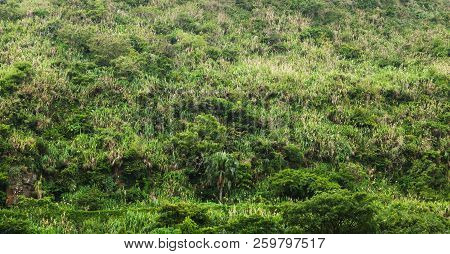 Tropical Forest Growing On Hill, Backgrount Photo Texture. Keelung, Taiwan