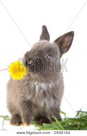 Grey Bunny Smelling A Flower