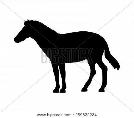Horse Silhouette Extinct Mammalian Animal. Vector Illustration