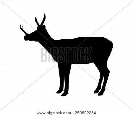 Synthetoceras Silhouette Extinct Mammalian Animal. Vector Illustration