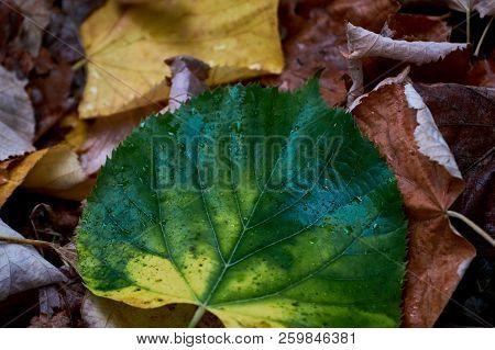 Autumn / Fall Leaves - Seasonal Background Theme.