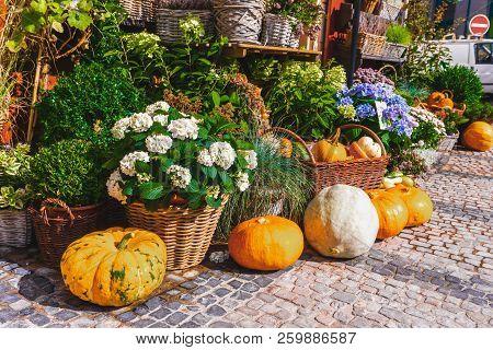 Seasonal Decorations With Pumpkins. Autumn Decorations. Pumpkins Halloween.autumn Still Life. Autumn
