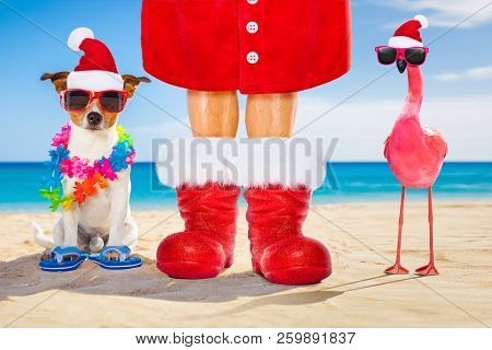 Dog And Owner Sitting Close Together At The Beach On Summer Christmas Vacation Holidays, Wearing A S