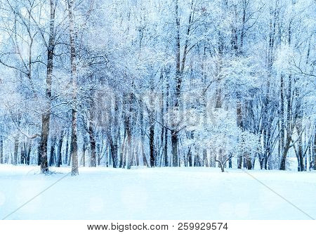 Winter landscape - frosty trees in winter forest in cold weather. Tranquil winter forest nature under snowfall. Beautiful winter forest