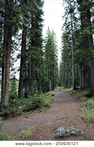 A Secluded Path Leads Around A Crystal Clear Lake On The Grand Mesa In Colorado.