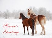 Two frosty horses in fog and snow gazing to distance, with text Seasons greetings poster