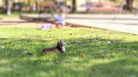 A Gray Cat In The City Park In The Green Grass Looked Up And Looked At The Birds Flying Up. Randomly
