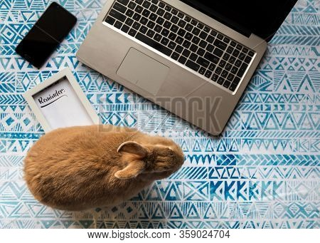 Work From Home Concept With Laptop And Rufus Rabbit And Reminder Framed Text On Blue Printed Cloth F