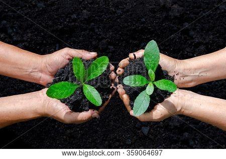 Tree Planting. Holding Small Green Tree Plant On Soil, Trees Growing Seedlings. Holding Tree On Natu