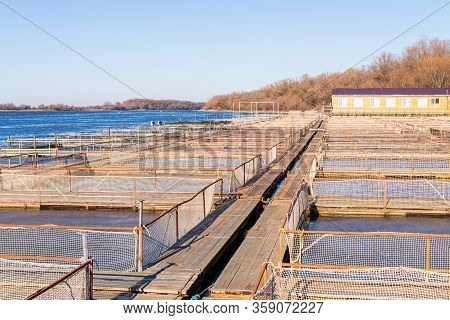 Tanks Outdoors Of Farm For Industrial Breeding Sturgeon Fish.