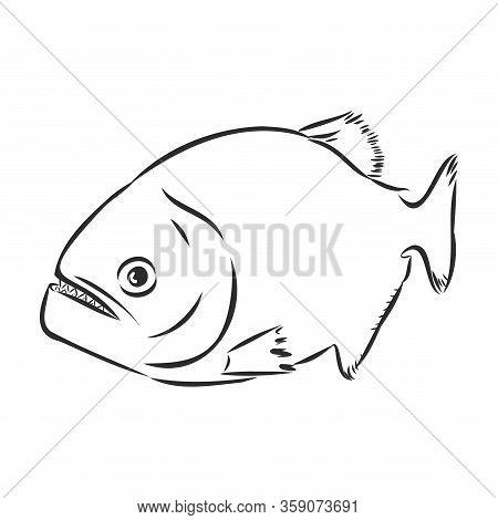 Piranha Vector Illustration Icon On White Background
