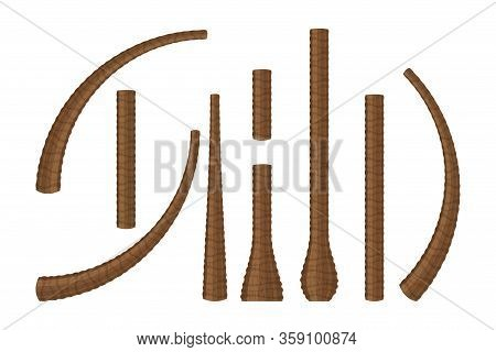 Coconut Tree Trunk Set Isolated On White Background, Illustration Palm Or Coconut Trunk Collection,