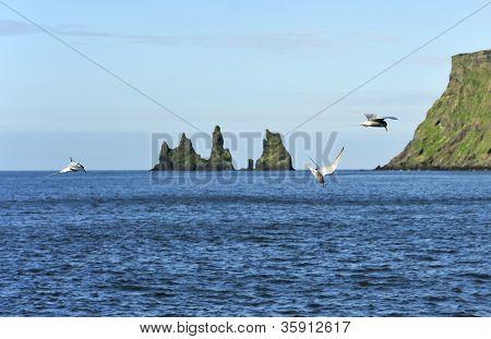 Birds And Rocks Reynisdrangar