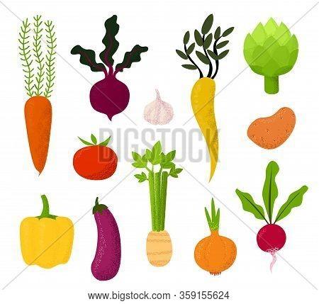 All Kind Of Vegetables Illustration Beet, Tomato, Potato, Carrots And Eggplant, Celery, Garlic, Radi