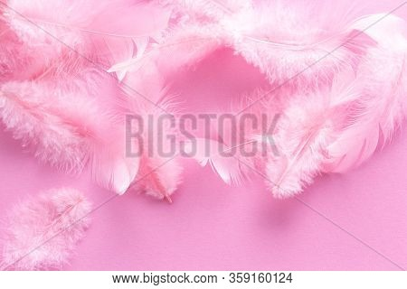 Soft, Fluffy Coral Pink Feathers On Pastel Rose Background. Minimalism Style. Vintage Trend. Feather