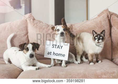 Cute dog and cat at home with blank card. Pet at room during pandemic coronavirus