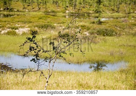 Swamp In The Green Meadow And Forest Far Away. Marsh, Bog,  Morass, Fen, Backwater, Mire, Slough...