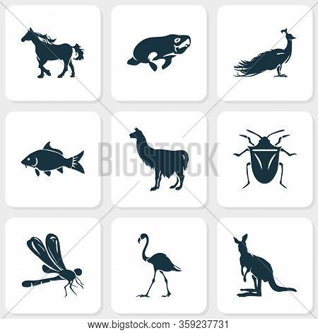 Zoo Icons Set With Llama, Dragonfly, Horse And Other Haddock Elements. Isolated Vector Illustration