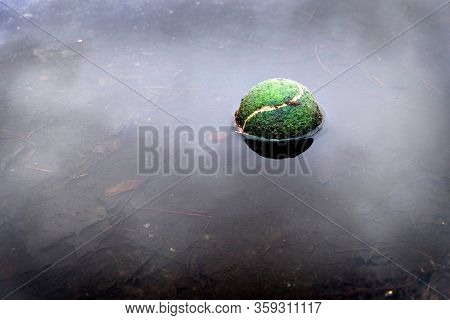 Tennis ball floating in water representing forgotten or abandoned sports