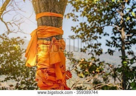 Robe Of Buddhist Monk Wrap Around Tree Trunk