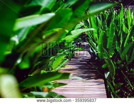 Pedestrian Wooden Bridge With A Thickly Growing Green Background Of Tropical Plants