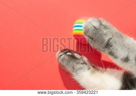 Gray Cat Paws With Round Little Balls On A Red Background. The Concept Of Toys For Pets, Games With