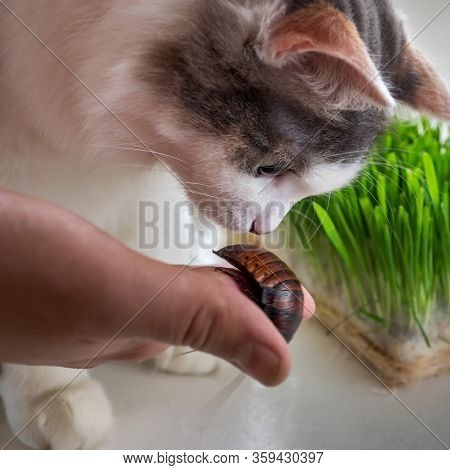 A Young Fluffy Cat Looks With Interest At A Madagascar Cockroach Held By A Boys Hand