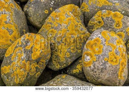 Some Stones With Yellow Algae On. Yellow Algae In Beautiful Texture