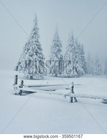Gloomy winter landscape with covered snow trees. Idyllic wintry scene. Carpathian, Ukraine, Europe. Winter nature wallpapers. Christmas holiday concept. Discover the beauty of earth.