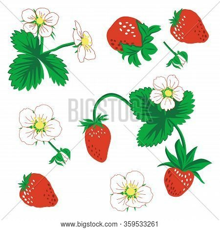 Seamless Pattern Of Berries, Leaves And Strawberry Flowers. Vector Illustration. Strawberry Vector P