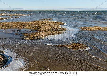 Lake Kamyslybas Is A Large Saltwater Lake In Kazakhstan. Seaweed On The Shore