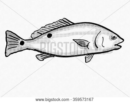 Retro Cartoon Style Drawing Of A Red Drum, Spottail, Redfish, Channel Bass Or Puppy Drum, A South Ca