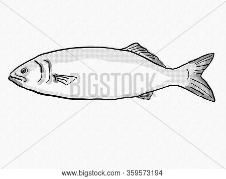 Retro Cartoon Style Drawing Of A Bluefish, A South Carolina Inshore Saltwater Marine Life Fish Speci